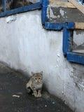 一只离群猫在一个老楼梯旁边掩藏 图库摄影