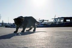 一只离群猫在小游艇船坞在伊斯坦布尔土耳其 图库摄影