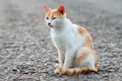一只离群猫的画象 白色和红色猫单独坐路,文本的, copyspace很多空间 斜眼看红色的猫 星期日 免版税库存照片
