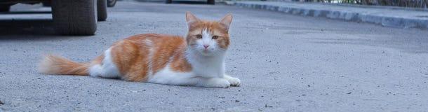 一只离群猫的画象 白色和红色猫单独坐路,文本的, copyspace很多空间 斜眼看红色的猫 库存图片