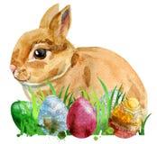一只米黄兔子的水彩例证用鸡蛋和草 免版税图库摄影