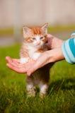 一只红色小猫的纵向在现有量的 免版税库存照片