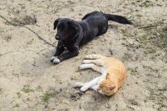 一只红色猫和沮丧肩并肩说谎 免版税库存照片