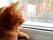 一只红色猫坐一个窗口和神色在秋天天 库存图片