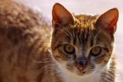 一只红色街道猫的头在阳光下关闭  免版税库存图片