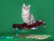 一只纯血统猫坐有红色诗歌选的一个雪撬在绿色背景 免版税库存图片