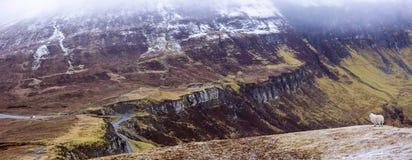 一只绵羊的全景在俯视多雪的山的小山的 库存图片
