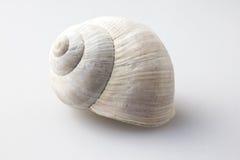 一只罗马蜗牛的壳 库存照片