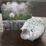 一只羊羔的明信片在一个草甸用蒲公英 库存照片