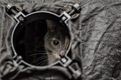 一只美丽的三色猫暗中侦察在t外面圆的孔  图库摄影