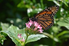 一只美丽的五颜六色的蝴蝶 库存图片
