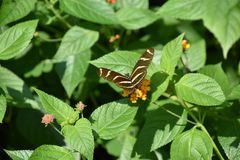 一只美丽的五颜六色的蝴蝶 库存照片