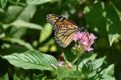 一只美丽的五颜六色的蝴蝶 免版税库存照片