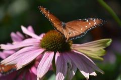 一只美丽的五颜六色的蝴蝶 免版税库存图片