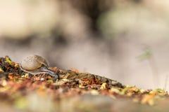 一只美丽的好的蜗牛 库存图片