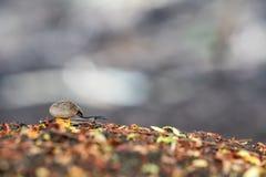 一只美丽的好的蜗牛 库存照片