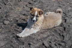 一只美丽的孤独的无家可归的小狗杂种动物的画象在村庄 图库摄影