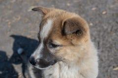 一只美丽的孤独的无家可归的小狗杂种动物的画象在村庄 免版税库存照片