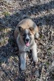一只美丽的孤独的无家可归的小狗杂种动物的画象在村庄 免版税库存图片