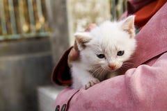 一只美丽的小猫感到温暖在妇女` s夹克里面 免版税库存照片