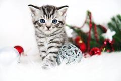 一只美丽的小猫 与小猫和欢乐装饰的圣诞节海报 免版税库存照片