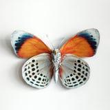 一只美丽的巨型蝴蝶 免版税图库摄影