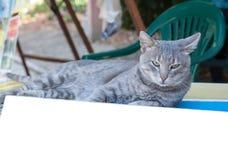 一只美丽的幼小发烟性猫的画象 库存照片