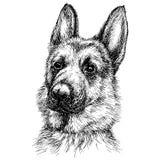 一只美丽的德国牧羊犬的剪影画象 免版税库存照片