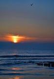 一只美丽的日落和鸟在海滩弗利辛恩,荷兰 免版税库存图片