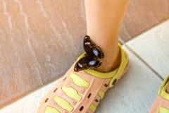 一只美丽的棕色蝴蝶在黄色橡胶脚腕脚,穿坐一个晴天 图库摄影