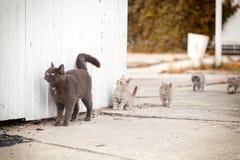 一只美丽的灰色猫的画象 免版税库存图片