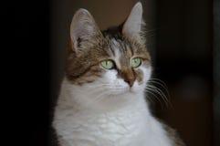 一只美丽的猫的照片,猫照片 免版税图库摄影