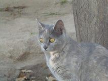 一只美丽的猫的集中 免版税库存照片