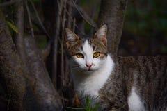 一只美丽的猫的画象在庭院里,微明 免版税库存图片