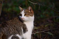 一只美丽的猫的画象在庭院里,微明 免版税库存照片