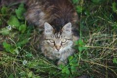 一只美丽的猫 图库摄影