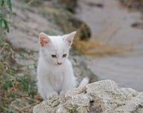 一只美丽的矮小的白色小猫 图库摄影
