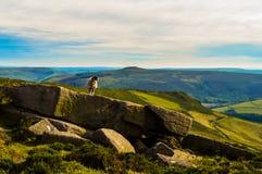 一只美丽的绵羊生动了描述俯视美丽的上部Derwent谷,高峰区国家公园 库存图片