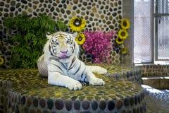 一只美丽的老虎的画象 图库摄影