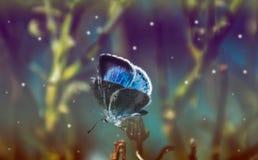 一只美丽的蓝色蝴蝶的宏指令 软和梦想的作用 库存照片