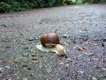 一只美丽的蜗牛 库存图片