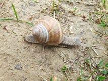 一只美丽的蜗牛 免版税库存照片