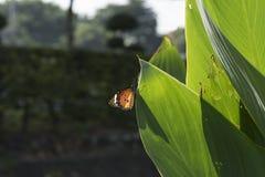一只美丽的蝴蝶在庭院里 免版税图库摄影