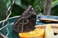 一只美丽的蝴蝶 库存照片