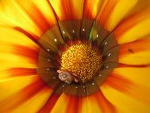 一只美丽的雏菊和蜗牛的照片 图库摄影