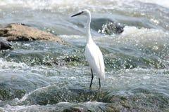 一只美丽的鸭子攀爬feathef 免版税库存图片