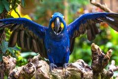 一只美丽的鹦鹉在Ubud,巴厘岛,印度尼西亚热带动物园里  库存图片