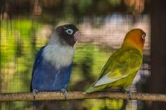 一只美丽的鹦鹉的画象 免版税图库摄影