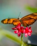一只美丽的蝴蝶本质上与花的 免版税库存照片