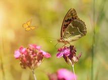 一只美丽的蝴蝶的梦想的照片 库存照片
